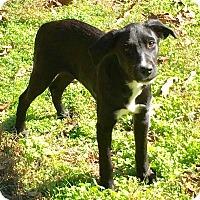 Adopt A Pet :: Fern-pending adoption - Manchester, CT