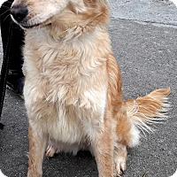 Adopt A Pet :: Stefanie - San Diego, CA