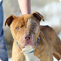 Adopt A Pet :: Rambo - Lander, WY