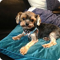Adopt A Pet :: Rena - Seminole, FL