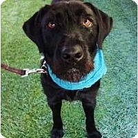 Adopt A Pet :: Mable - Mission Viejo, CA