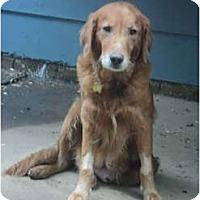 Adopt A Pet :: Hera - Denver, CO