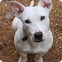 Adopt A Pet :: Otto - Marietta, GA