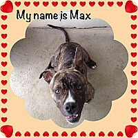 Adopt A Pet :: Max - Yerington, NV