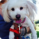 Adopt A Pet :: Winnie