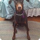Adopt A Pet :: Kloe