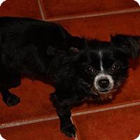 Adopt A Pet :: Gilbert - Gilbert, AZ