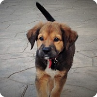 Adopt A Pet :: Penny - Middlesex, NJ