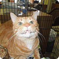 Adopt A Pet :: Garfield - Medina, OH
