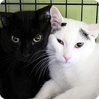 Adopt A Pet :: Muntz - Chicago, IL
