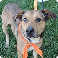 Adopt A Pet :: Pokey Euth Nov 16 Hurry! - Lincolnton, NC