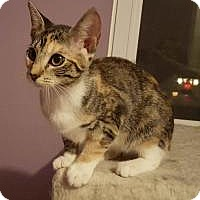 Adopt A Pet :: Micka - Berkeley Hts, NJ