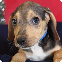 Adopt A Pet :: March - Waldorf, MD