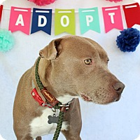 Adopt A Pet :: Rain - Macon, GA