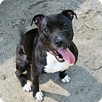 Adopt A Pet :: Zuri - Santa Maria, CA