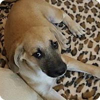 Adopt A Pet :: Waldo - Royal Palm Beach, FL