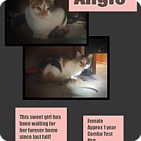 Adopt A Pet :: Angie - CLEVELAND, OH