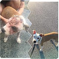 Adopt A Pet :: Cypress - Waynesboro, TN