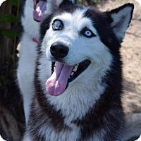 Adopt A Pet :: Keiko - Jupiter, FL