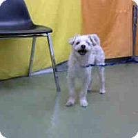 Adopt A Pet :: PABLO-URGENT 10/25 @ DEVORE - San Bernardino, CA