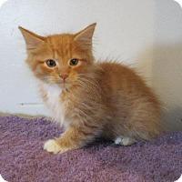 Adopt A Pet :: Blinky - St. Louis, MO