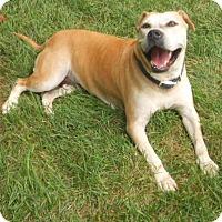 Adopt A Pet :: Princess Elsa - Salisbury, NC