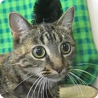 Adopt A Pet :: Primrose - Lloydminster, AB