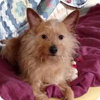 Adopt A Pet :: Jax - Akron, OH