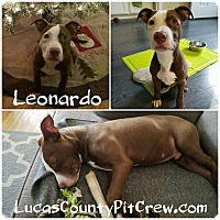 Adopt A Pet :: Leonardo - Toledo, OH