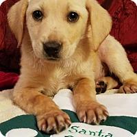 Adopt A Pet :: Pocket (James MD-DE) - Newark, DE