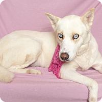 Adopt A Pet :: Gracie - Kerrville, TX