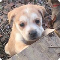 Adopt A Pet :: <3 Puppy 1 <3 - Sylacauga, AL