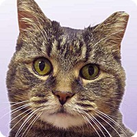 Adopt A Pet :: Marie - Norwalk, CT