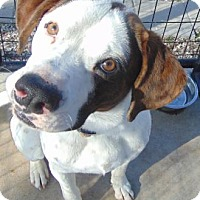 Adopt A Pet :: Dickens - Tulsa, OK