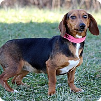 Adopt A Pet :: Kippy - Waldorf, MD