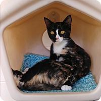 Adopt A Pet :: Patches - Umatilla, FL