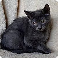 Adopt A Pet :: Gumbie - Davis, CA