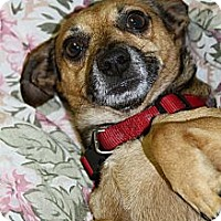 Adopt A Pet :: Charlie Brown - Muskegon, MI
