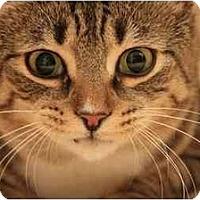 Adopt A Pet :: Zita - Bonita Springs, FL
