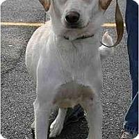 Adopt A Pet :: Cindy Lou - Cumming, GA