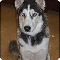 Adopt A Pet :: Oli - Belleville, MI