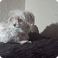 Adopt A Pet :: Gigi - San Dimas, CA