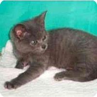 Adopt A Pet :: Amelia - Secaucus, NJ