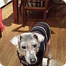 Adopt A Pet :: Fabulous Freckles