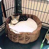 Adopt A Pet :: Zachary - Speonk, NY