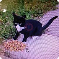 Adopt A Pet :: Floyd - East Brunswick, NJ