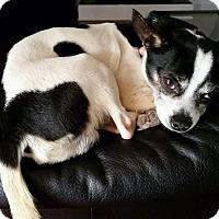 Adopt A Pet :: Carter - benson, NC