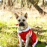 Adopt A Pet :: Hope - Loomis, CA