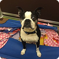 Adopt A Pet :: Popeye - San Francisco, CA