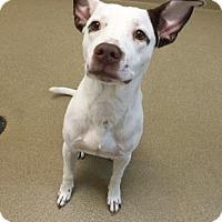Adopt A Pet :: Googly Boogly - Miami, FL